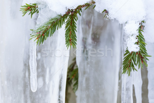 Icicle hanging from spruce branch Stock photo © Juhku