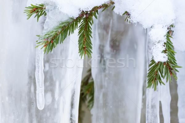 Jégcsap akasztás lucfenyő ág faág fa Stock fotó © Juhku