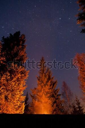 Campfire illuminates trees and stars in the sky Stock photo © Juhku