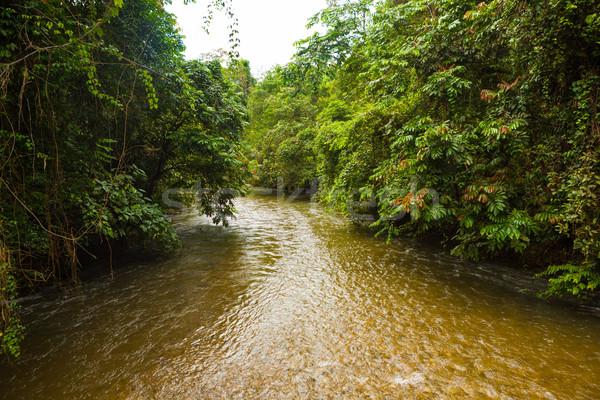 Dzsungel folyó Borneo háttér zöld utazás Stock fotó © Juhku