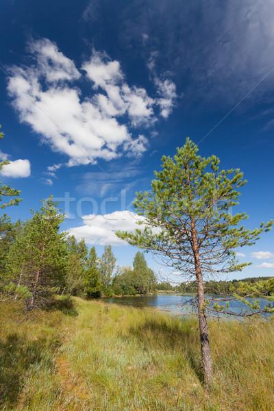 Wenig Kiefer See Finnland Sommer Wasser Stock foto © Juhku