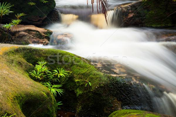 小 ストリーム ジャングル 公園 マレーシア ボルネオ島 ストックフォト © Juhku