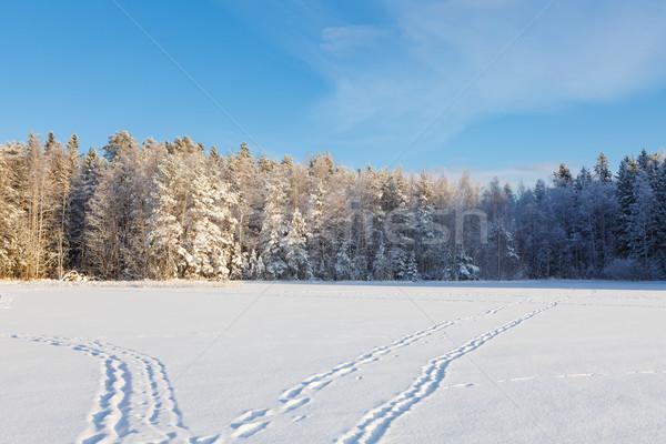 Congelés lac neige couvert forêt ensoleillée Photo stock © Juhku