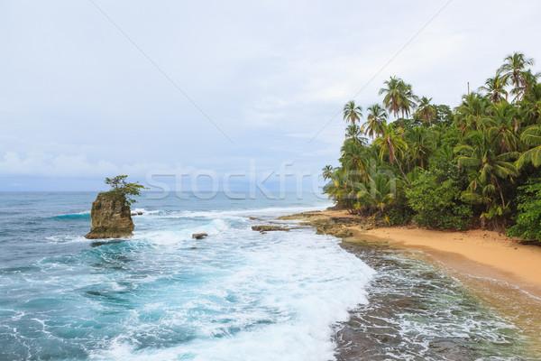 Idylliczny plaży niebo wody drzewo charakter Zdjęcia stock © Juhku