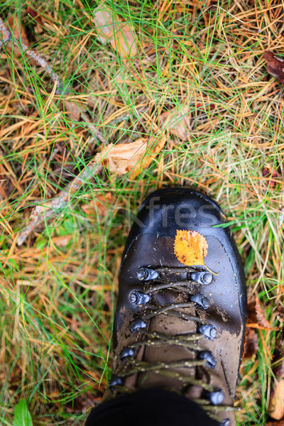 Sarı sonbahar yaprak trekking çizme ıslak Stok fotoğraf © Juhku