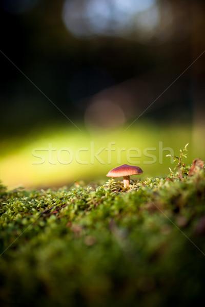 Colorato view funghi muschio foresta erba Foto d'archivio © Juhku