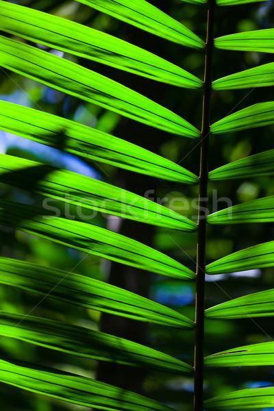 Green backlit leaf in the jungle Stock photo © Juhku