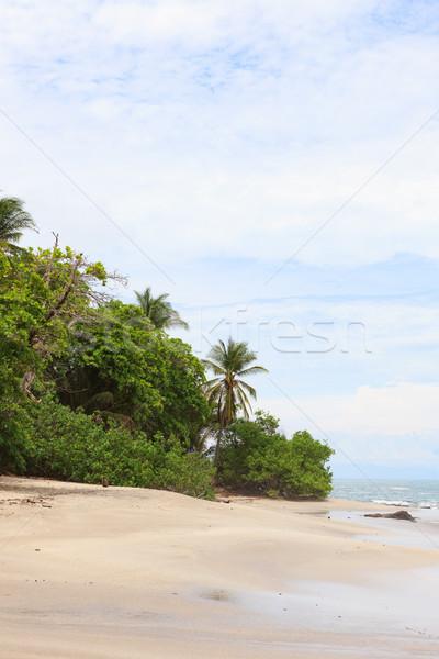 Trees and sand beach montezuma Stock photo © Juhku