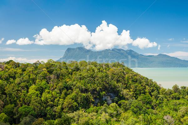 Tropical landscape over jungle and hills Stock photo © Juhku