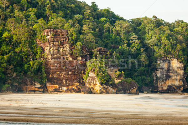 Cliff and rainforest in sand beach Stock photo © Juhku