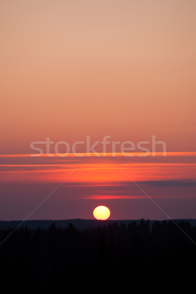 Sun setting over forest Stock photo © Juhku