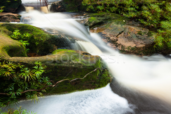 Small stream in jungle Stock photo © Juhku