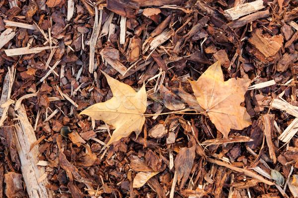 Bark mulch and autumn maple leaves Stock photo © Juhku