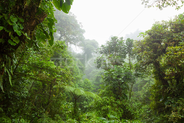 Misty rainforest in Monteverde cloud forest reserve Stock photo © Juhku