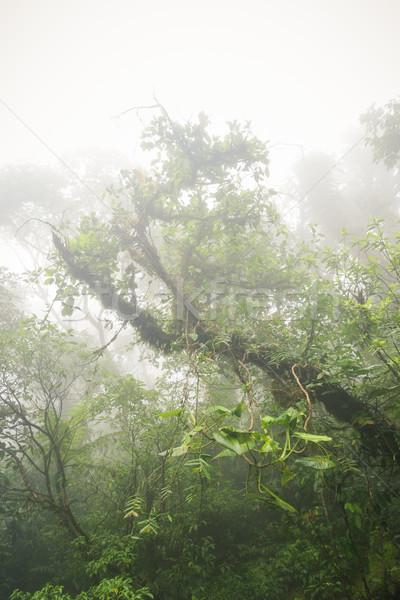 Głęboko bujny mglisty Rainforest la Kostaryka Zdjęcia stock © Juhku