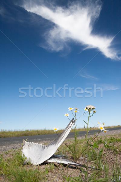 Dead bird wings side of the road Stock photo © Juhku