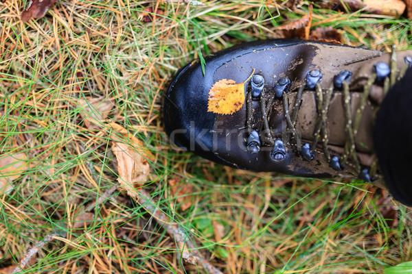 Yellow autumn leaf on a trekking boot Stock photo © Juhku