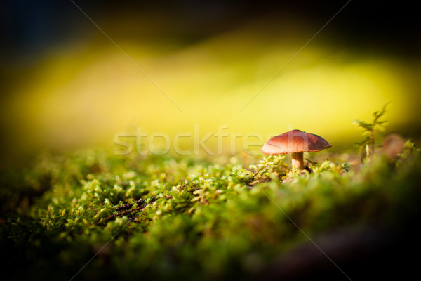 Colorato view funghi muschio foresta alimentare Foto d'archivio © Juhku