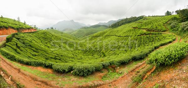 Tea plantations panorama munnar india Stock photo © Juhku