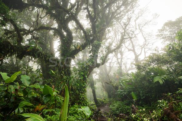 深い 豊かな 熱帯雨林 ラ コスタリカ ストックフォト © Juhku