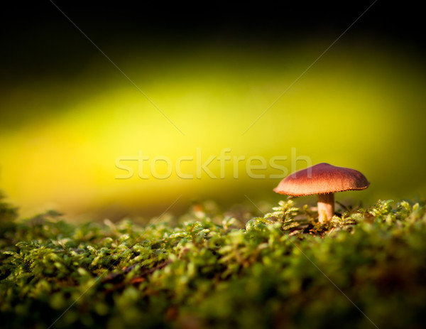 Colorido ver cogumelo musgo comida grama Foto stock © Juhku