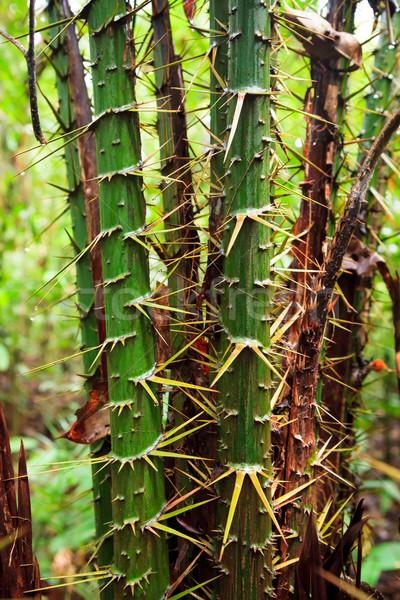 Spiky plant in rainforest Stock photo © Juhku