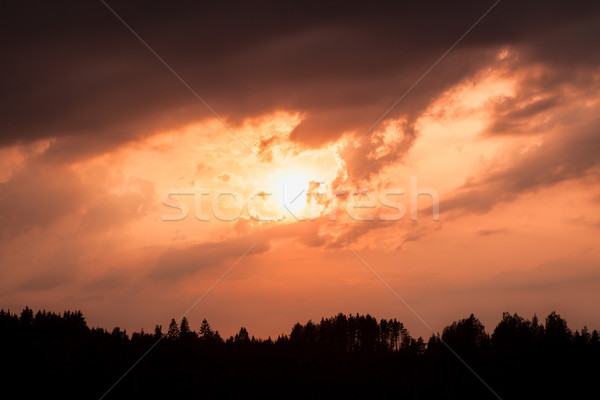 Ardiente puesta de sol silueta forestales nublado cielo Foto stock © Juhku