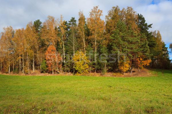 Automne paysage arbres campagne nuages fond Photo stock © Juhku