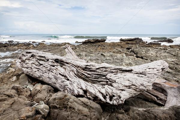 Gray driftwood at rocky beach Stock photo © Juhku