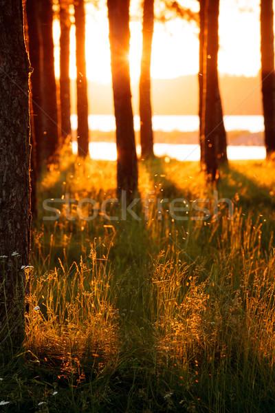 ストックフォト: ツリー · シルエット · 長い · 乾草 · 光