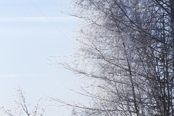 Vorst hemel boom bos landschap Stockfoto © Juhku