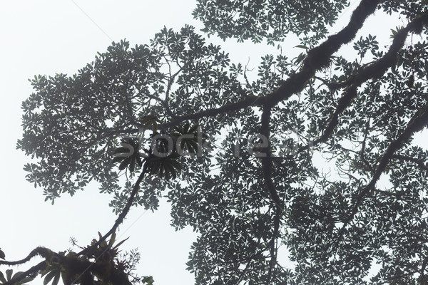 árbol follaje cielo tropicales hermosa rama Foto stock © Juhku