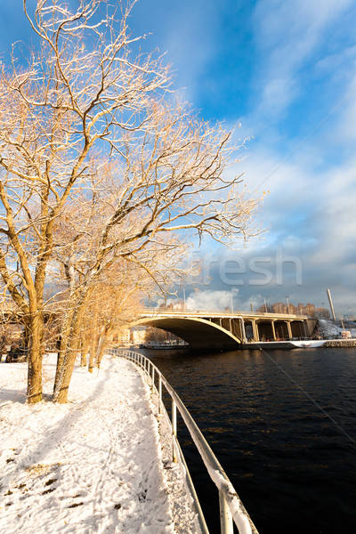 Golden morning light trees and bridge Stock photo © Juhku