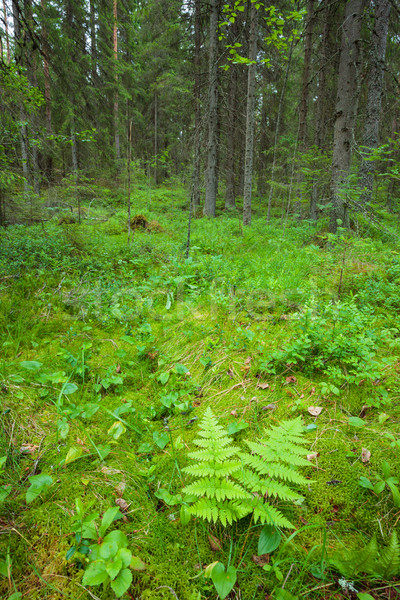 Stock photo: Forest floor vegetation