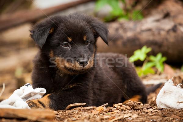 Aranyos fekete kutya kutyakölyök kívül városi Stock fotó © Juhku