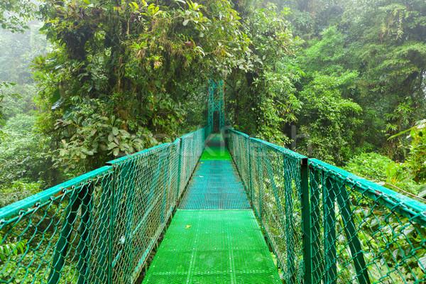 висячий мост леса подвесной облаке лес резерв Сток-фото © Juhku