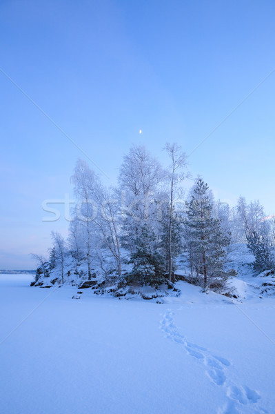 Frozen trees and footprints on snow Stock photo © Juhku