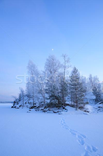Congelés arbres empreintes neige hiver paysage Photo stock © Juhku