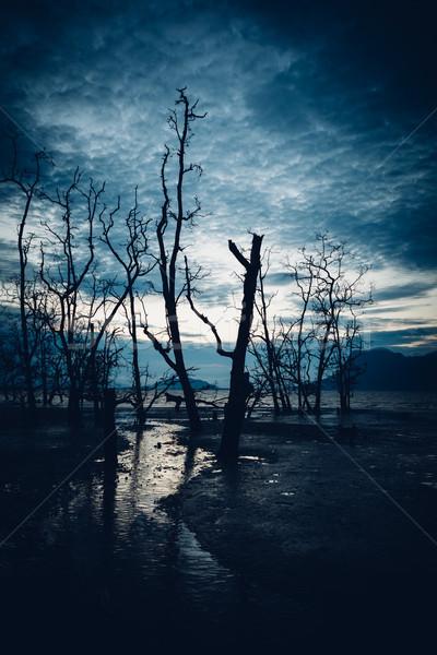 Sáros tengerpart halott erdő szürkület víz Stock fotó © Juhku