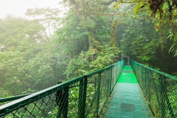 Puente colgante selva colgante nube forestales reserva Foto stock © Juhku