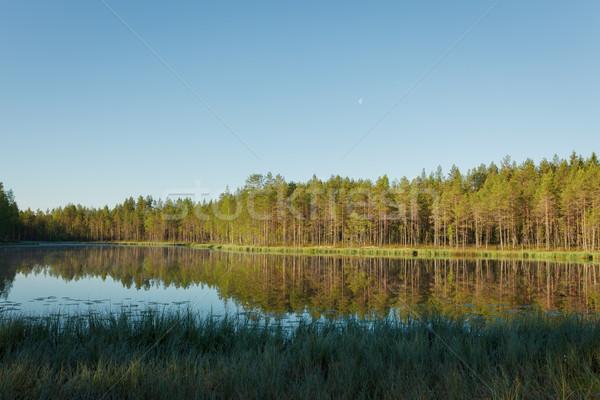 Ochtend zonsopgang licht bos vijver landschap Stockfoto © Juhku