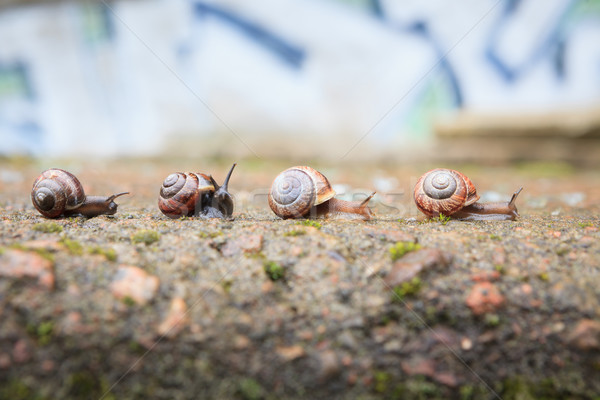 Stock photo: Group of small snails going forward