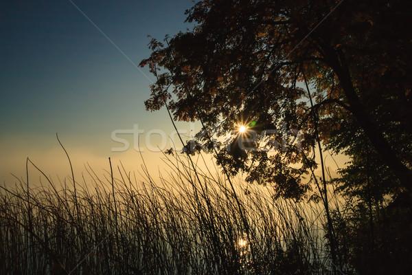 Moody morning at lakeside Stock photo © Juhku