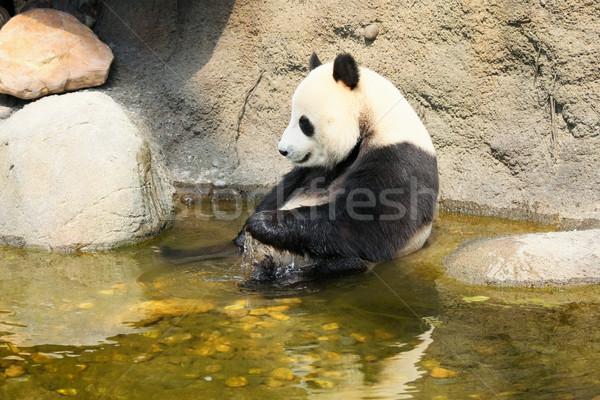 гигант Panda сидят воды ванны Сток-фото © Juhku