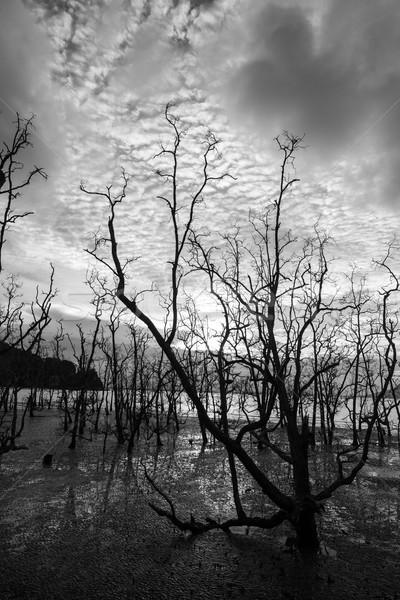 Halott fák sáros tengerpart naplemente alacsony Stock fotó © Juhku