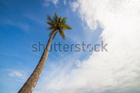 Lang palmboom hemel deels bewolkt boom Stockfoto © Juhku