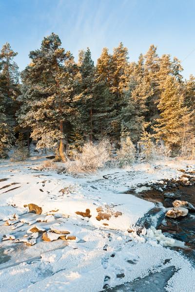 Lakefront forest winter Stock photo © Juhku