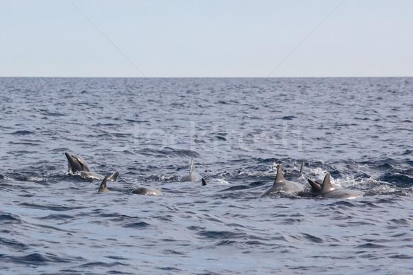 Golfinhos Indonésia escolas água feliz Foto stock © Juhku