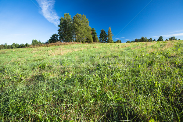 Tranquil grassland and trees at sunrise Stock photo © Juhku