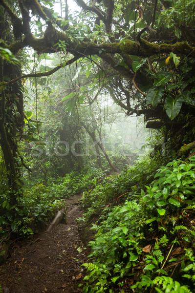Profundo exuberante brumoso selva madera Foto stock © Juhku